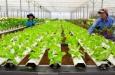 Hai vấn đề trầm trọng của nông nghiệp trong đại dịch