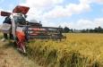 Xuất khẩu gạo vào EU có thể tăng gấp 4 lần