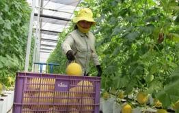 Đổ vốn lớn vào nông nghiệp